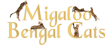 Migaloo Bengal Cats and Kittens